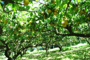Such a peaceful orchard