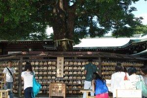 เขียนคำอวยพรโดยซื้อแผ่นไม้ราคา 500 เยน และนำมาแขวนไว้บริเวณนี้