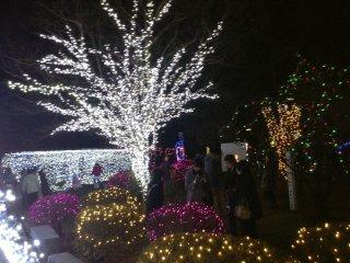 Kotodai Park is aglow through the night.
