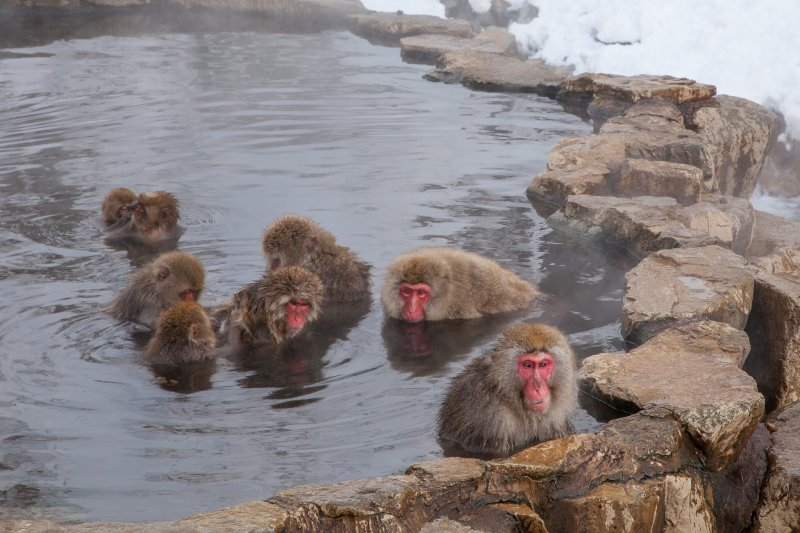 <p>Jigokudani Monkey Park in Nagano Prefecture, where the monkeys bathe in&nbsp;a natural hot spring</p>