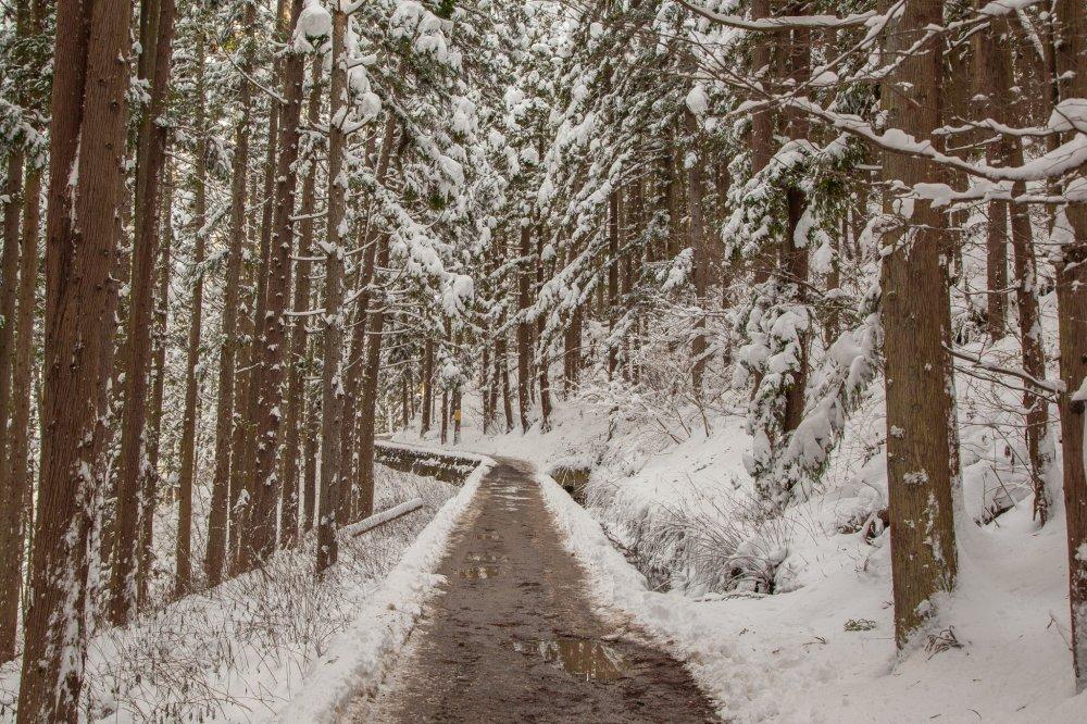 Để đến với công viên này, cách tốt nhất là đi bằng taxi lên núi, nó mất khoảng 30-40 phút, và với tuyết và băng trên mặt đất, nó có một chút nguy hiểm và có thể không phải là ngày tốt nhất nếu bạn đi cùng con nhỏ. Nên giữ ấm và mang giầy có độ bám tốt trên đế! Dù vậy nó lại có cảnh tượng khá ngoạn mục mà bạn cũng có thể thấy khi đến suối nước nóng.