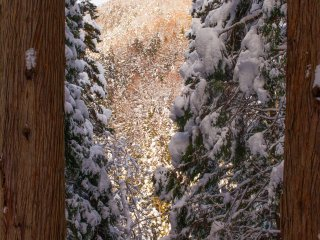 A glimpse of the mountains through gaps in the snow-covered trees