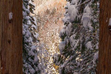 <p>A glimpse of the mountains through gaps in the snow-covered trees</p>