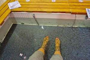 A glimpse of the foot bath with hundreds of little fishes sloughing off dead skin