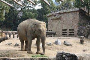 ช้างไทยที่เราภาคภูมิใจ