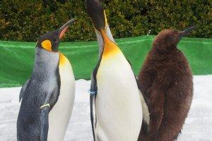 พาเหรดเพนกวิน ไฮไลท์หนึ่งของ Marine Park Nixe