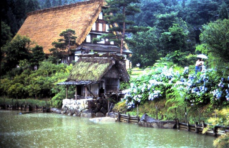 Традиционный крестьянский дом и фиолетово-голубые гортензии