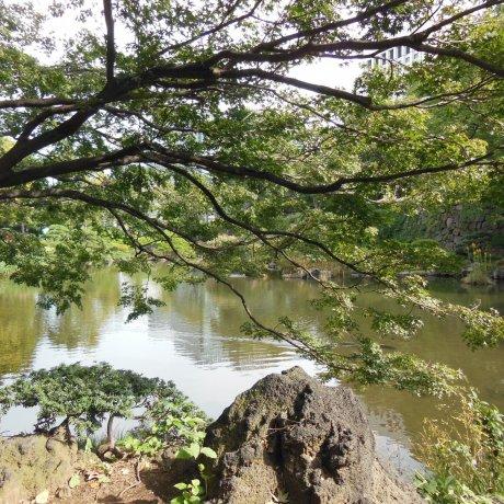 สวนฮิบิยะแสนสงบ