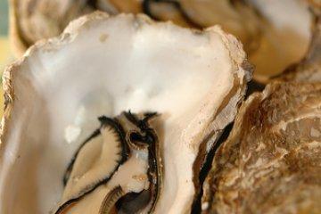 <p>Kanawa Open Shell Oyster</p>