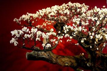 흰 꽃과 빨간 배경에 갈고리 모양의 가지들