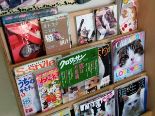 Tired of petting the cats? How about checking out the latest cat news in one of the many cat magazines available for reading?