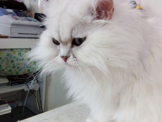 This fluffy feline guards the cash register from any...cat burglars.