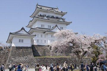 Castillo Odawara