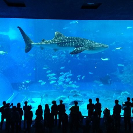 Aquarium Churaumi d'Okinawa