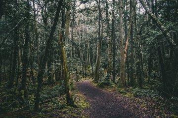 Bosque Aokigahara