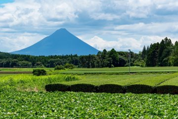 Discover Virtually Japanese Green Tea From Farm to Cup