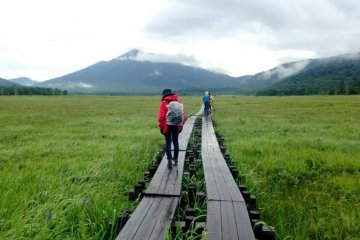 JapanTravel Local: Oze Marshland Hiking Trip - June 3, 2018 (Sun)