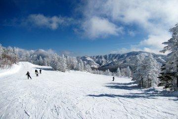 Shiga Kogen Snow Trip - January 22-24, 2021